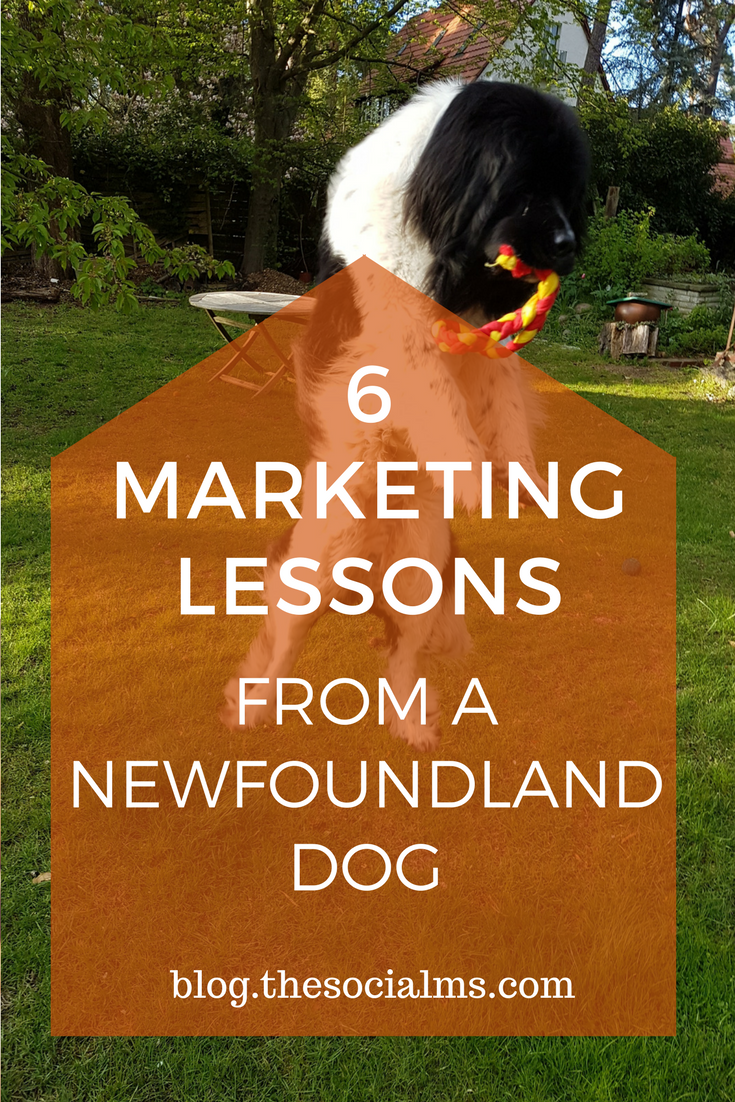 Some marketing lessons can best be taught by a Newfoundland Dog. Don't believe me? Read what our Newfoundland Dogs can teach you about marketing! social media marketing tips, blogging tips, fun marketing tips, social media behavior, marketing behavior, marketing best practices