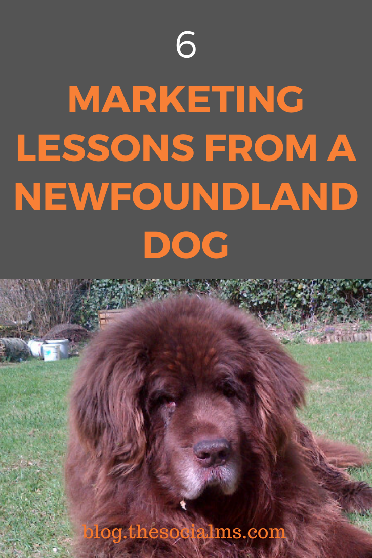 here are 6 marketing lessons that Mikos the gentle teddy bear you can see in my Twitter avatar and Fellow the playful, agile young black-and-white Newfoundland dog that you can find in my Facebook profile want to teach you. #marketinglessons #onlinemarketing #socialmediamarketing #digitalmarketing