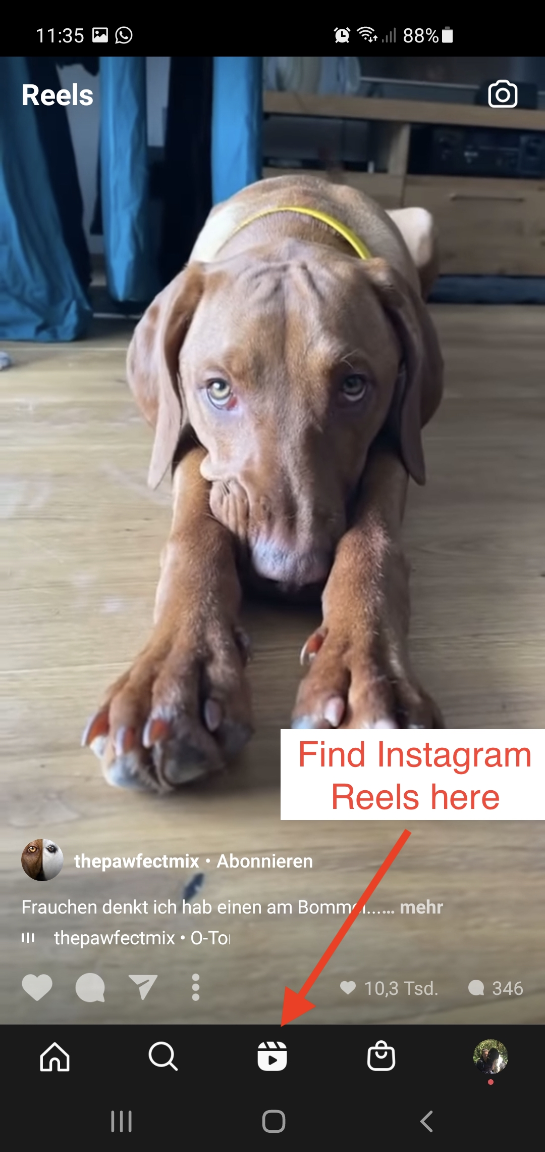 Find the Instagram Reels here